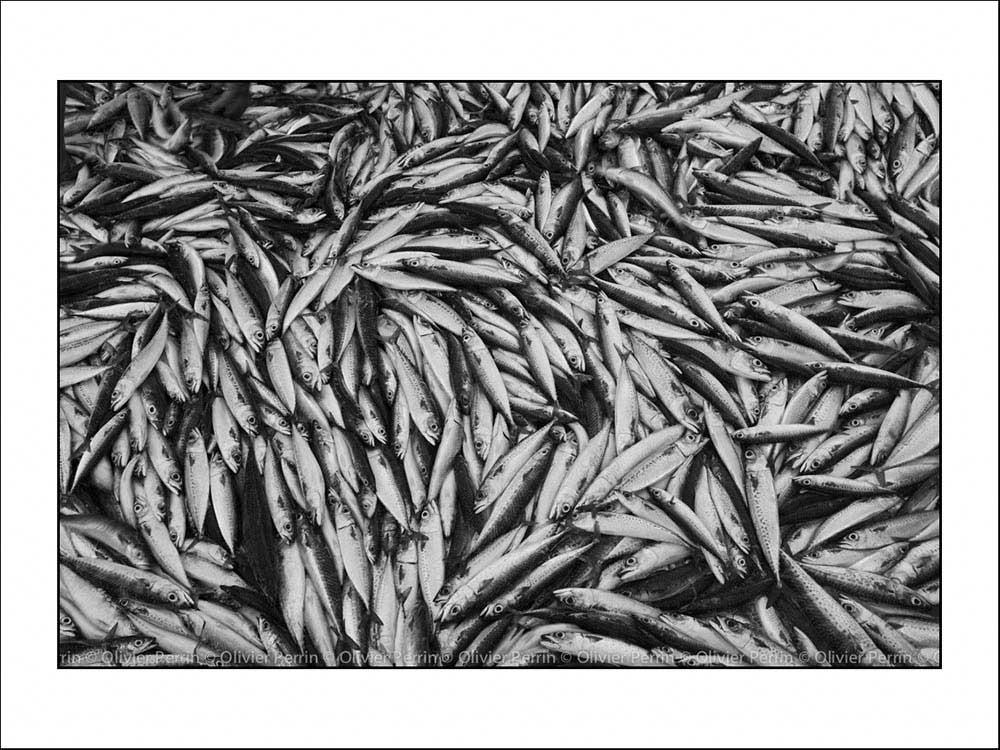 Ex006 portugal sardines Entre deux Eaux