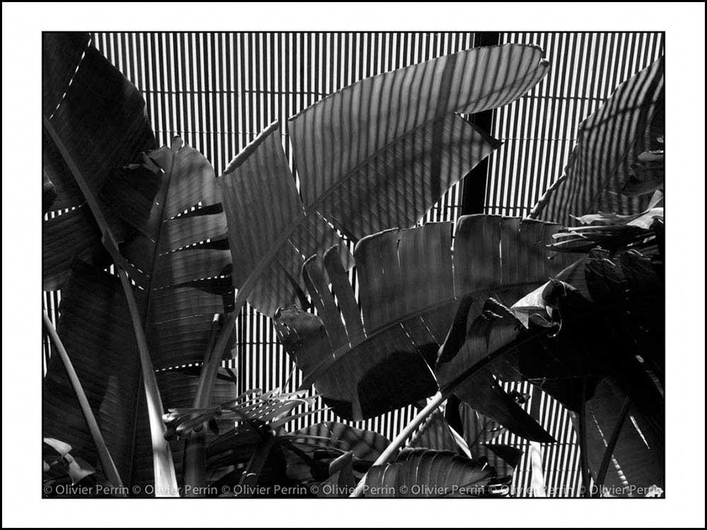 Lx010 Lisbonne Portugal parc eduardo 7
